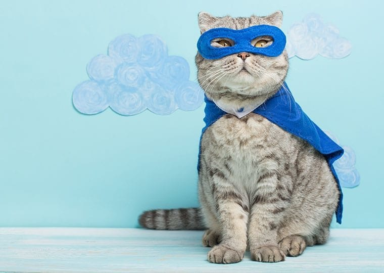 a cat dressed in a cape and superhero mask