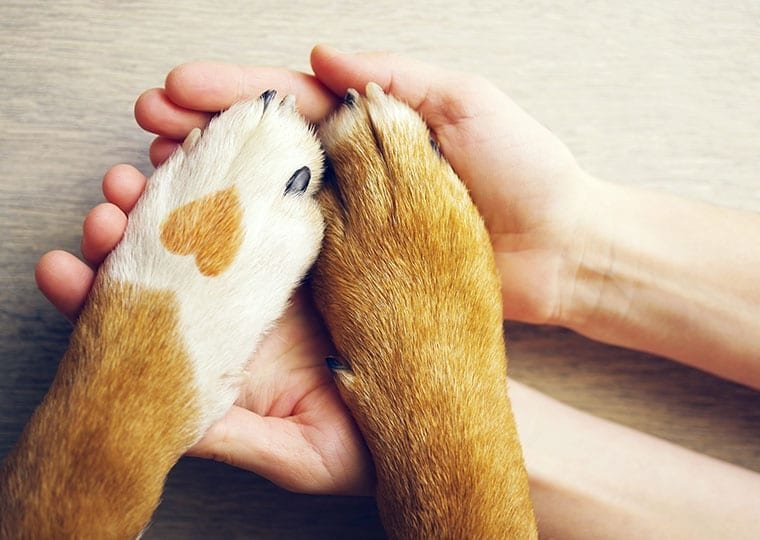 a dog with a heart shaped birth mark putting both of their paws on someones outstretched hands