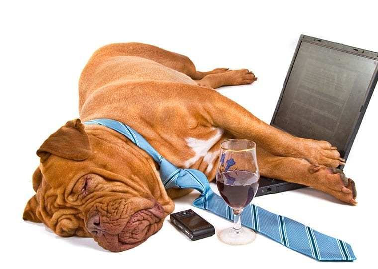 a dog wearing a tie asleep next to a laptop phone and glass of wine