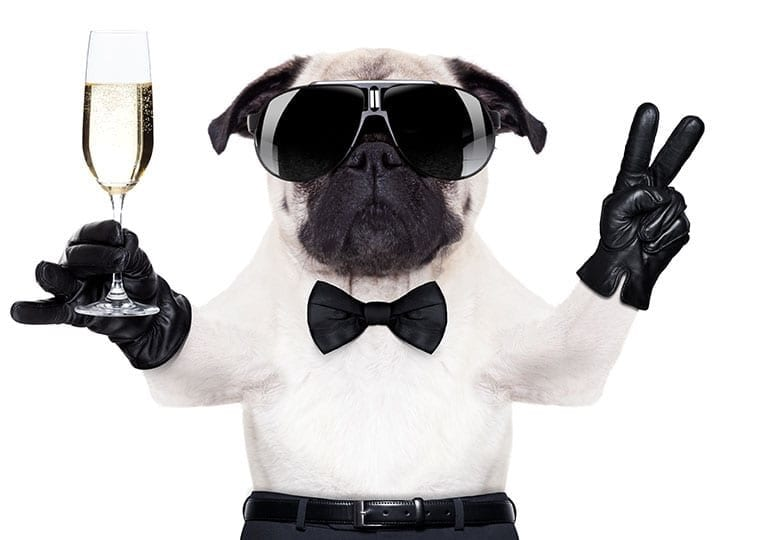 pug in glasses and a bow tie holding a champagne flute