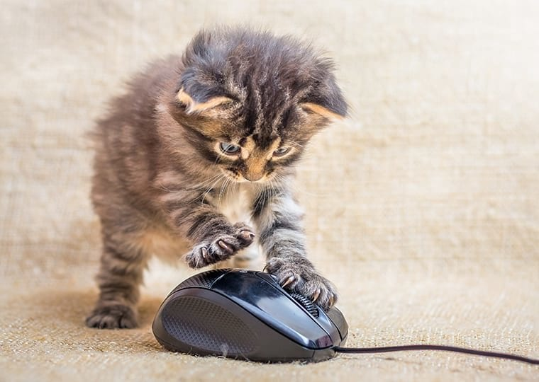 kitten clicking on a laptop mouse