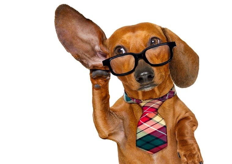 dog with glasses and a tie holding their hand to their ear